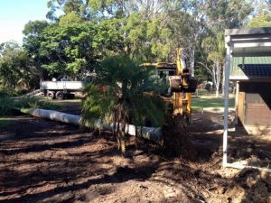 palm tree removal Alexandra Hills, Allhours Earthmoving Brisbane Redlands